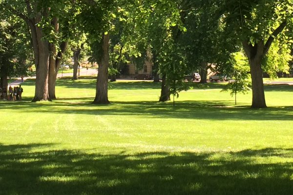 Trees on the CSU Oval